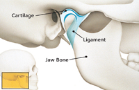 how the jaw joints works