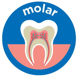 molar root canal costs aspen dental